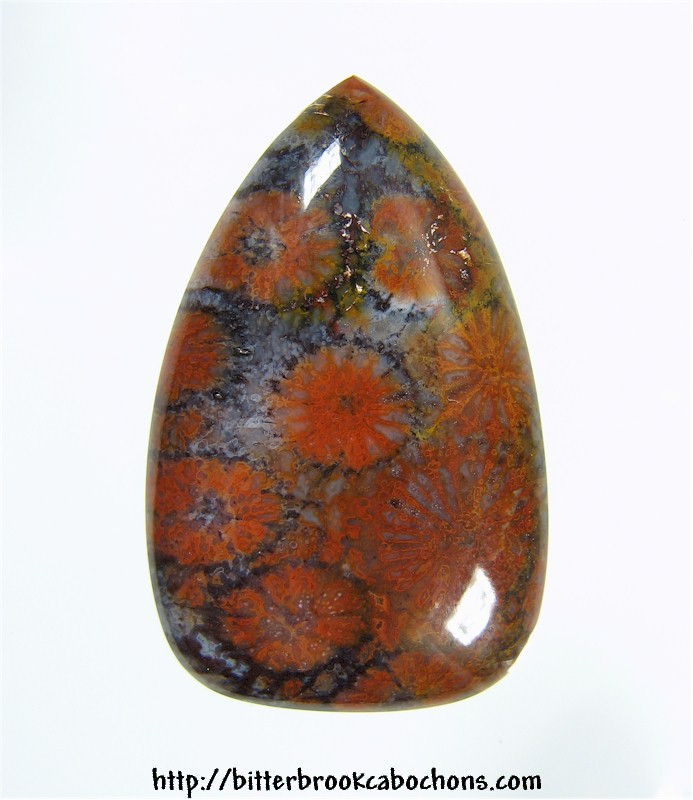 Agatized Coral Cabochon