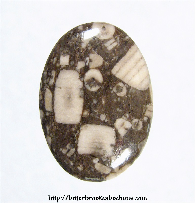Crinoid Fossil Cabochon